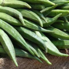 Proving of BHINDI – Lady finger- Okra