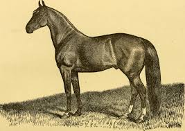 ARSENIC FOR HORSES