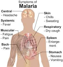 THE TREATMENT OF MALARIA